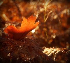 Petite photo de l'automne...