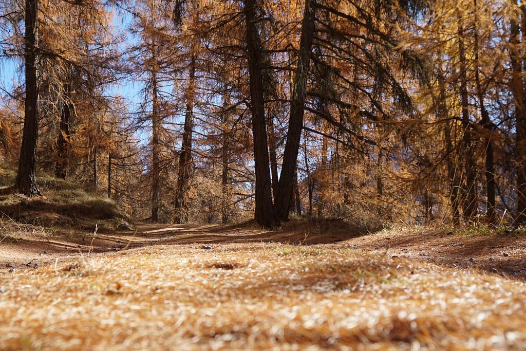 Herbst im Engadin