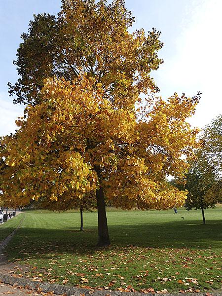 bel arbre en automne