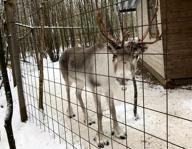 Lahti winter Finland 2017 64
