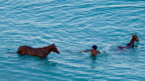 bridgetown barbados garrisonsavannahracetrack carlislebay ocean horses swim swimming beach