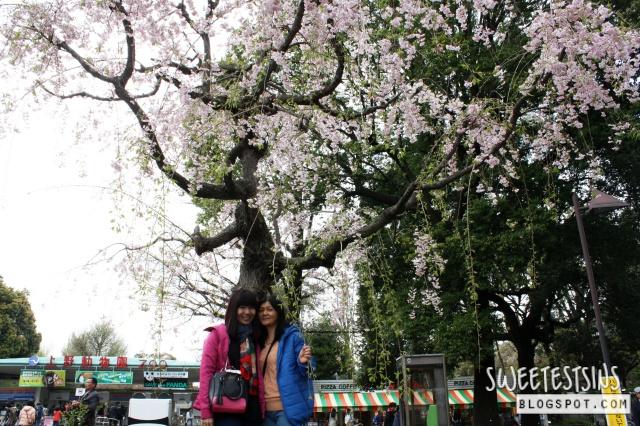 japan tokyo trip ueno park 29
