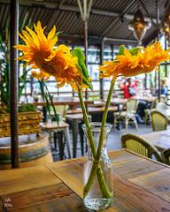 Cafe Flore, San Francisco