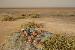 Delta dos rios Tigre e Eufrates, Kuwait