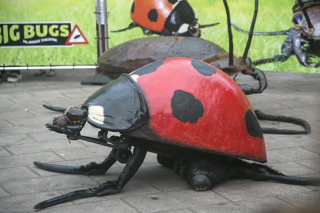 Big Bugs, MAFSantander