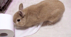 Bunny vs Toilet Paper