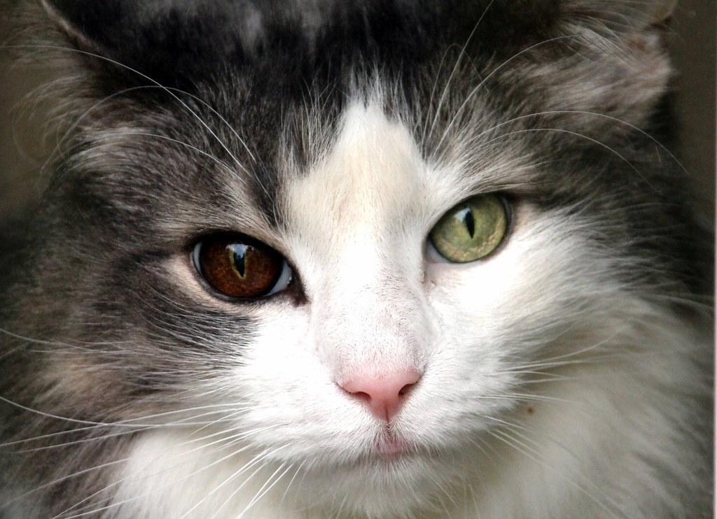 Fotos de animales de todo tipo incluyendo mascotas que más te gustan - Página 14 21929165620_fa94f59f7d_b