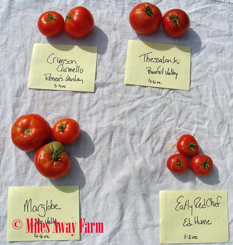 Medium Sized Tomato Trials 2015