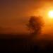 Foggy Morning by John D. Stocker