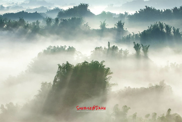 Bamboo Trees in the Mist
