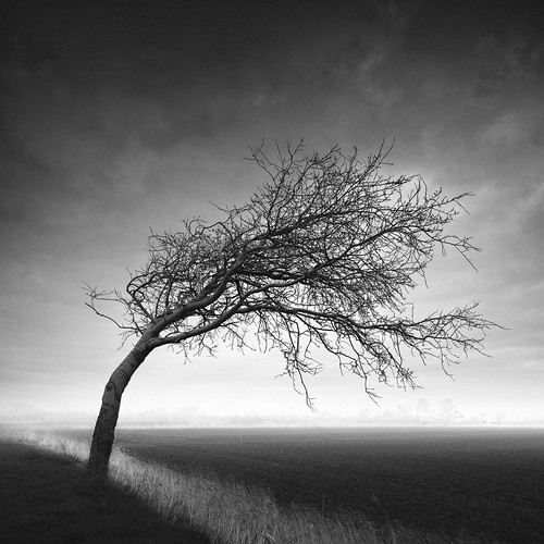 Tree por Joel Tjintjelaar
