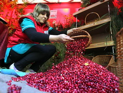 Fresh ripe cranberries in Belarus