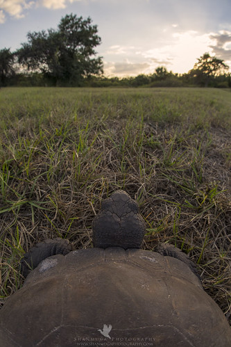 Life as a Gopher Tortoise (Explored)