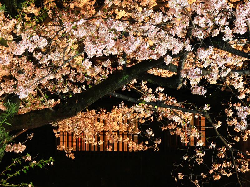 0403_祇園白川夜櫻 (39)