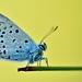 Butterfly ... by N.Batkhurel