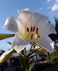 Lily 2013/ 14/15.