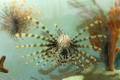 GS Marine Lab Lionfish 2