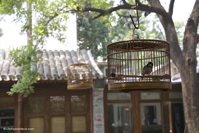 Beijing_Hutong_Museum_bird