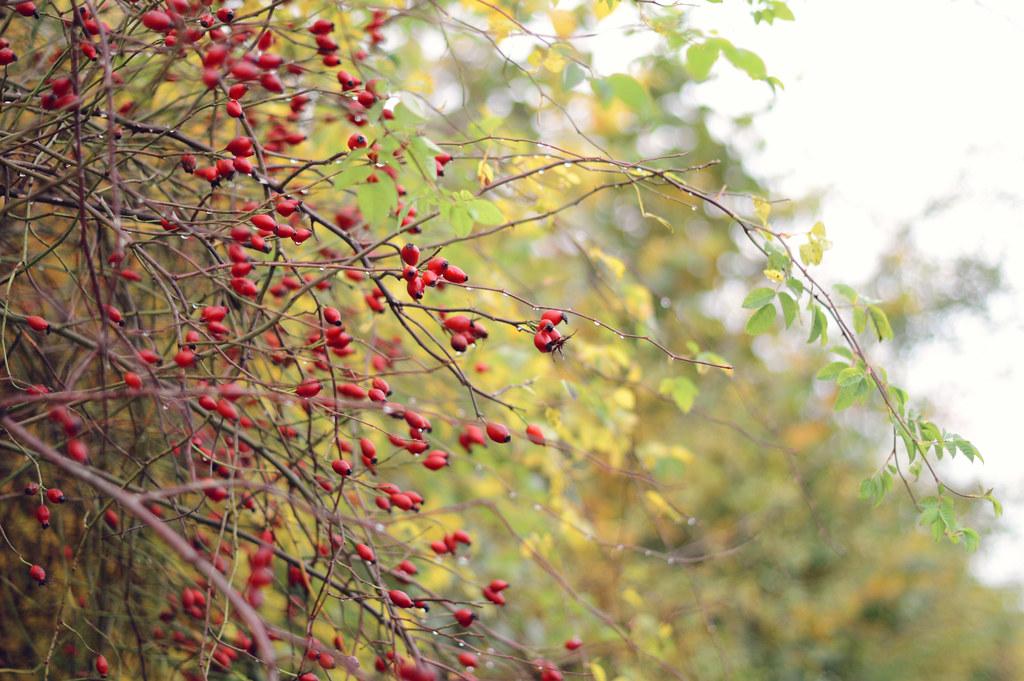autumnwalk5