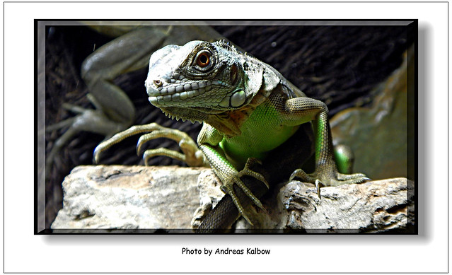 Scales-Reptiles September 2015 (12)