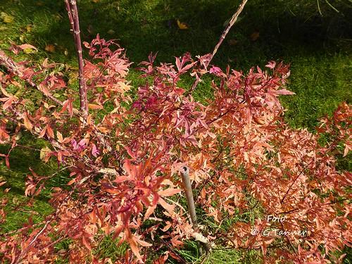 Herbstgarten 2015 2