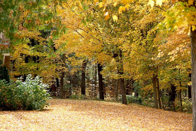 Autumn drive5