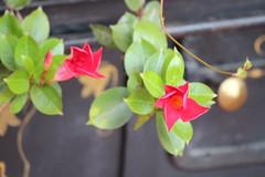 Flores/Cactus Hosteria Caballo Campana, Azuay