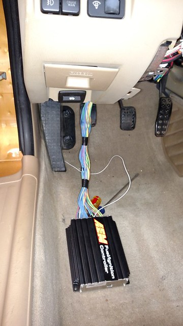 AEM Harness 5 (Small)