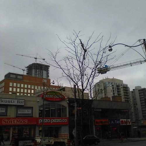 Cranes of Yonge and Eglinton #toronto #yongeandeglinton #condos #cranes #autumn