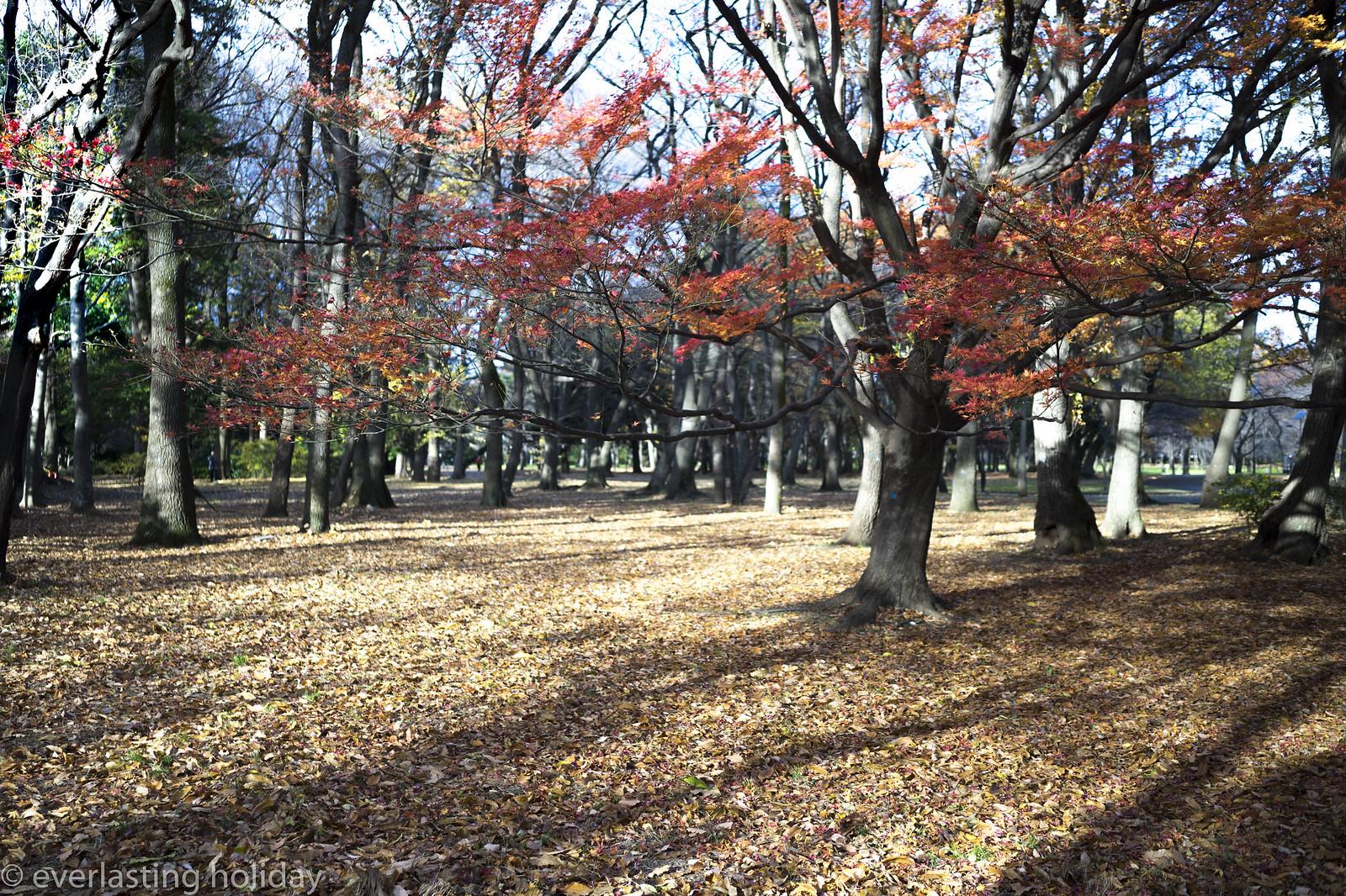 小金井公園 Koganei Park-0010