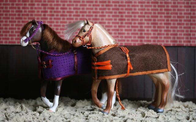 Arab Stallions