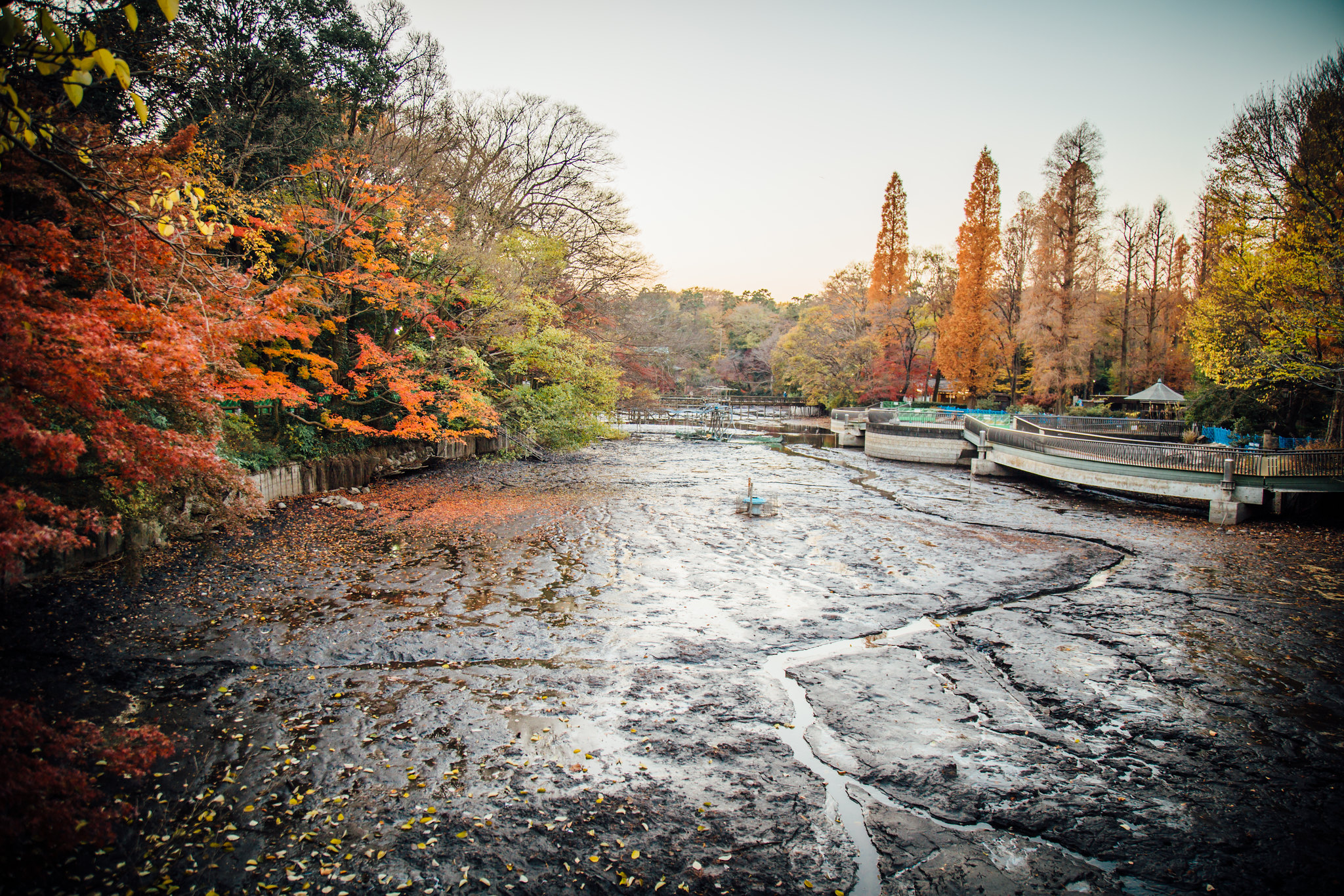 2015-12-08 井の頭公園 001-16