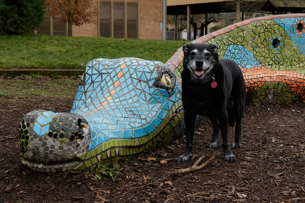 Our dog Ellie in front of the dragon statue at Irvington School in Portland