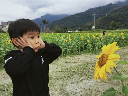 向日葵 wow trip 花海 關山 台東 愛台灣 iphone iphone365 children cloud kids green red yellow sky sunflower sun sunset flickrtravelaward saariysqualitypictures