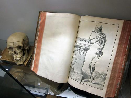 diderot skeleton