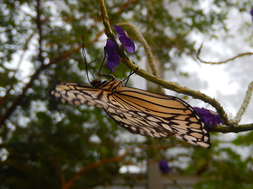 Sudbury - Science North - vlindertuin