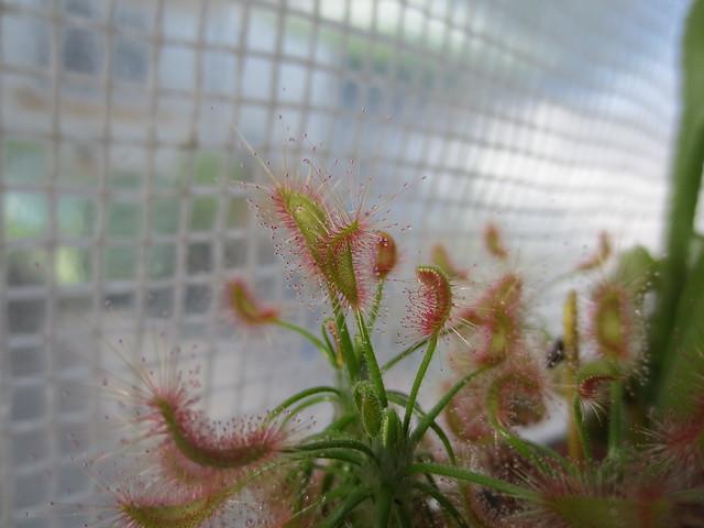 Plantas.werds.2012-2013 - Página 8 21277058565_b423713078_z