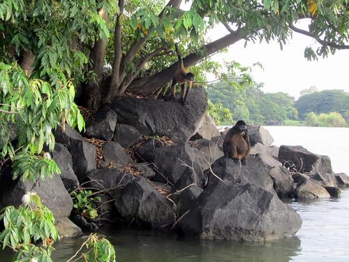 Monos, living la vida loca
