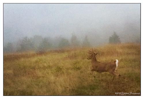 texture yard front deer buck lenabemanna
