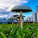 Mushrooms S33 by KikiMah