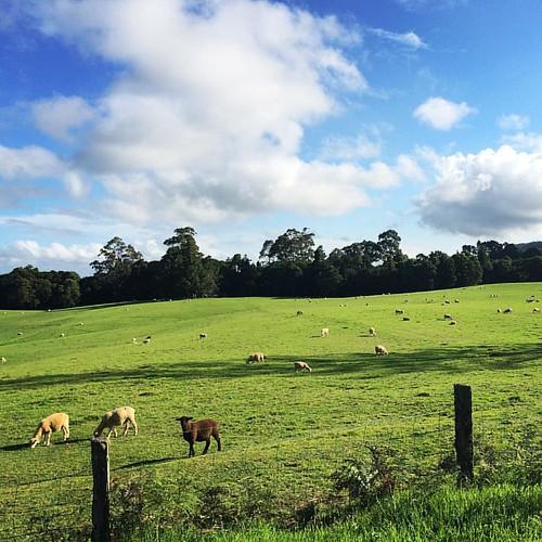 2015 Tour by car in NSW #NewSouthWales #Australia #RoadTripAustralia #RoadTrip