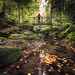 Fairytale Black Forest by Frederic Huber | Photography