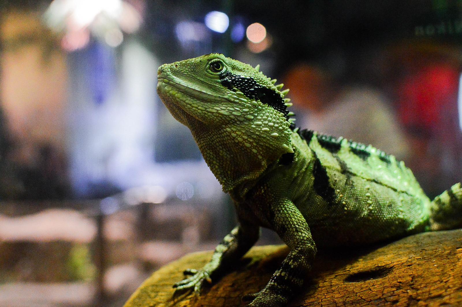 Melbourne Aquarium 2015
