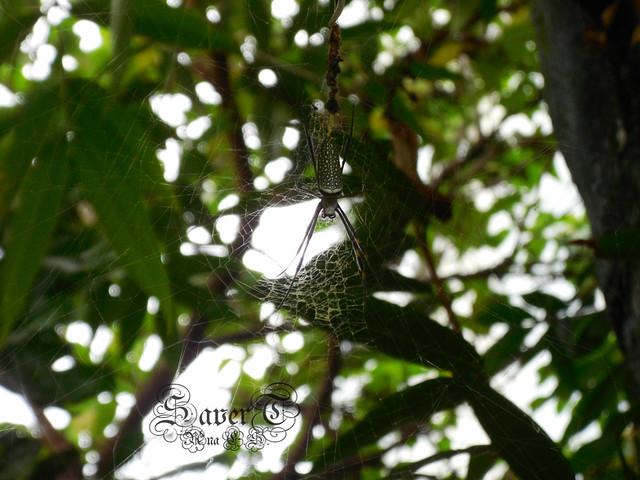 Aranha no jardim, Nikon COOLPIX S5200