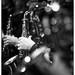 Jazzisfaction Big Band Invites .... by Patrick Van Vlerken