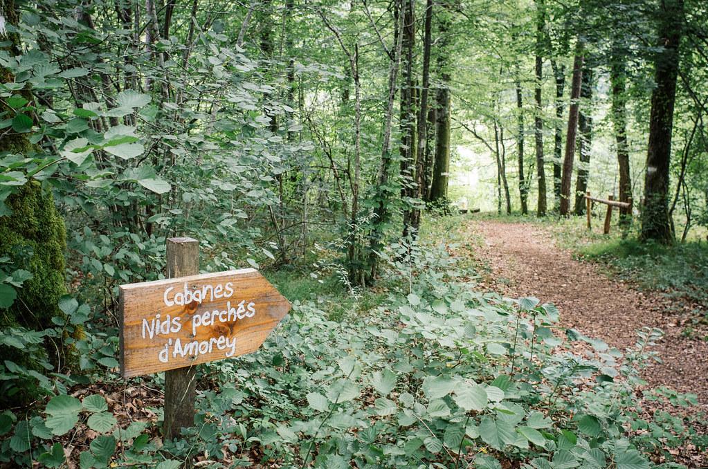 Observer les animaux - Forêt d'Auberive - Par ici !