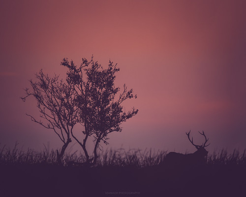 Stag at sunrise // 20 09 15