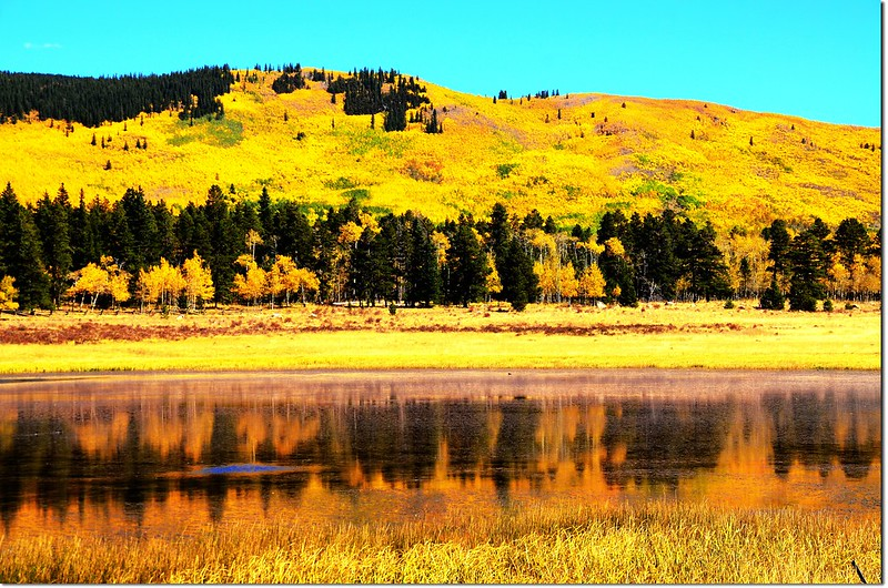 Fall colors at Kenosha Pass, Colorado (39)