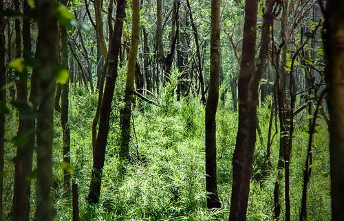 forest thailand dry d80 sakaerat