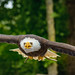 Bird-7223 by EbE_inspiration